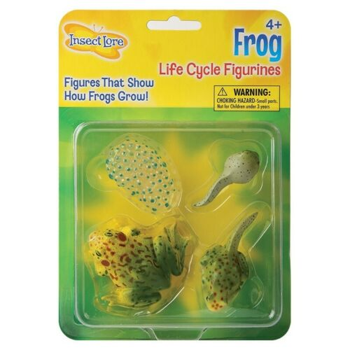 FROG LIFECYCLE topic learning resource spawn tadpole froglet and frog NEW