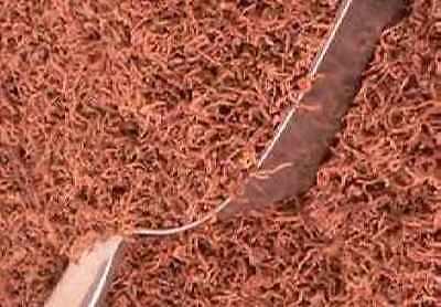 PREMIUM FREEZE DRIED BLOODWORM TROPICAL FOOD MARINE FISH TURTLE BREEDING BETTA