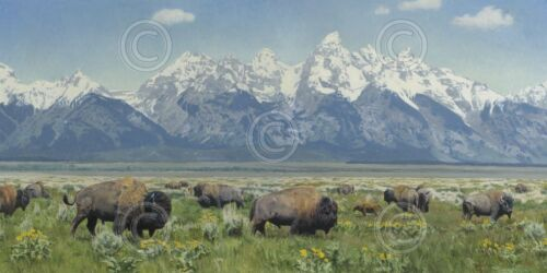 BISON ART PRINT A Land of Many Riches by Kyle Sims Wildlife Buffalo Poster 36x18