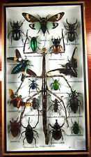 Real Butterfly Insect Bug Taxidermy Display in Framed Box Big Set Gift gpasy 03