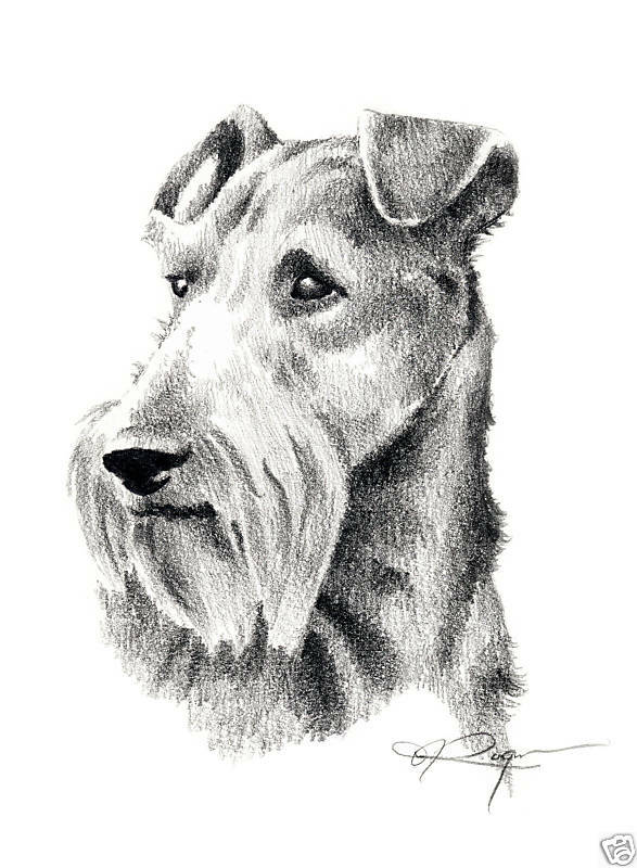 IRISH TERRIER Dog Drawing ART 13 X 17 Print by Artist DJR