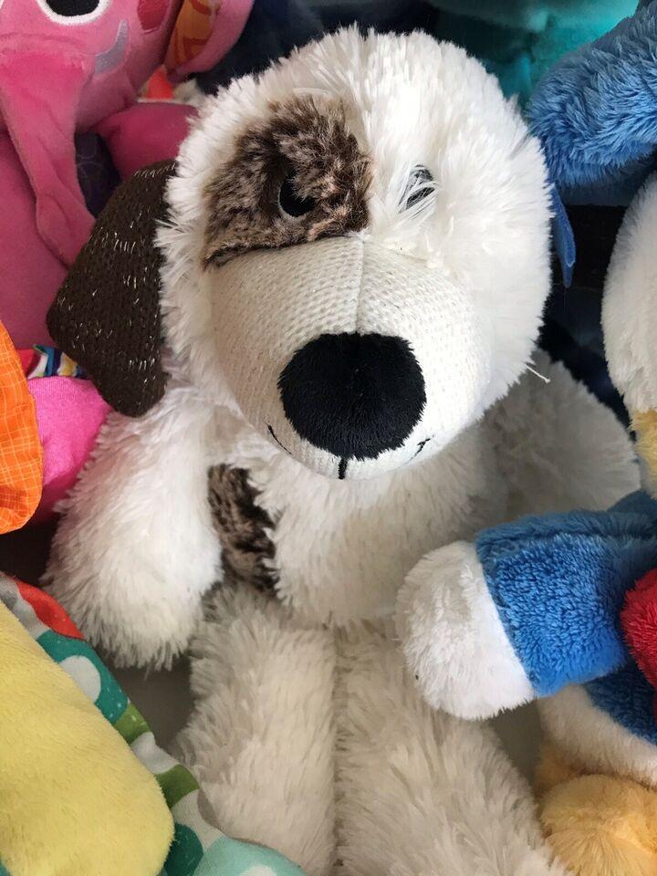 Hund bamse, Ukendt