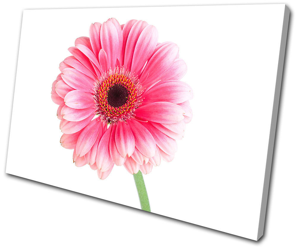 Floral Gerbera Flowers SINGLE TELA parete arte foto stampa stampa stampa 27057c