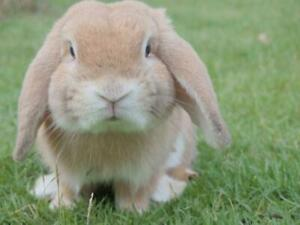 CUTE BUNNY RABBITS GLOSSY POSTER PICTURE PHOTO PRINT adorable bunnies 4119