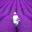 PROVENCE-LAVANDE-100-pieces-Graines-Bonsai-parfumee-Plantes-Fleurs-Jardin-NOUVEAU-N miniature 1