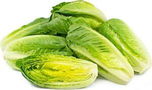 Pak Choi, Vegetable seeds 500 Buy3 get 4th free Oriental Green