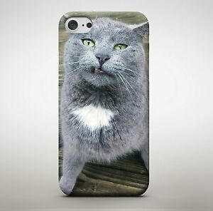 check out 2e25f ae68c Details about Cute Grey Chubby Cat Kitten Animal Cute Cuddle Green Eyes  Phone Case Cover