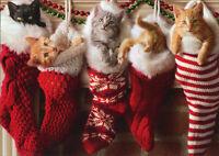 Kittens In Christmas Stocking - Box Of 10 Avanti Cat Christmas Cards