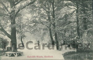 SHEFFIELD-Endcliffe-Woods-Postcard-nr-Yorkshire-Anon