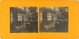 STEREO-Jardin-Botanique-Photo-Vintage-Argentique-PL62L10