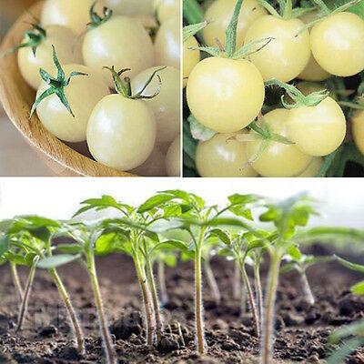 100 Pcs White Cherry Tomato Seeds Vegetable Seeds Organic Heirloom Free Shipping