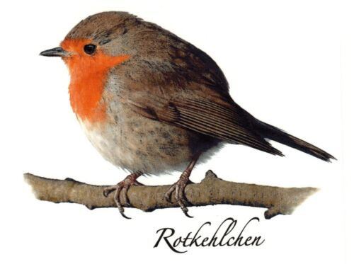 Red Robin Rotkehlchen Bird Select-A-Size Waterslide Ceramic Decals Bx