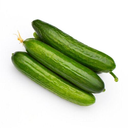 20 Dutch Cucumber Seeds Cucumber Cucumis Sativus Organic Vegetables