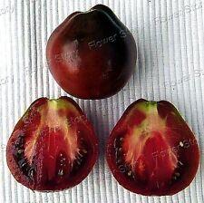 All Weather100 Indigo Rose Tomato Seeds Container/Ground Plant YardVegetable