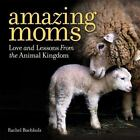 Amazing Moms : Love, Laughter, and Lessons from the Animal Kingdom by Rachel Buchholz (2016, Hardcover)