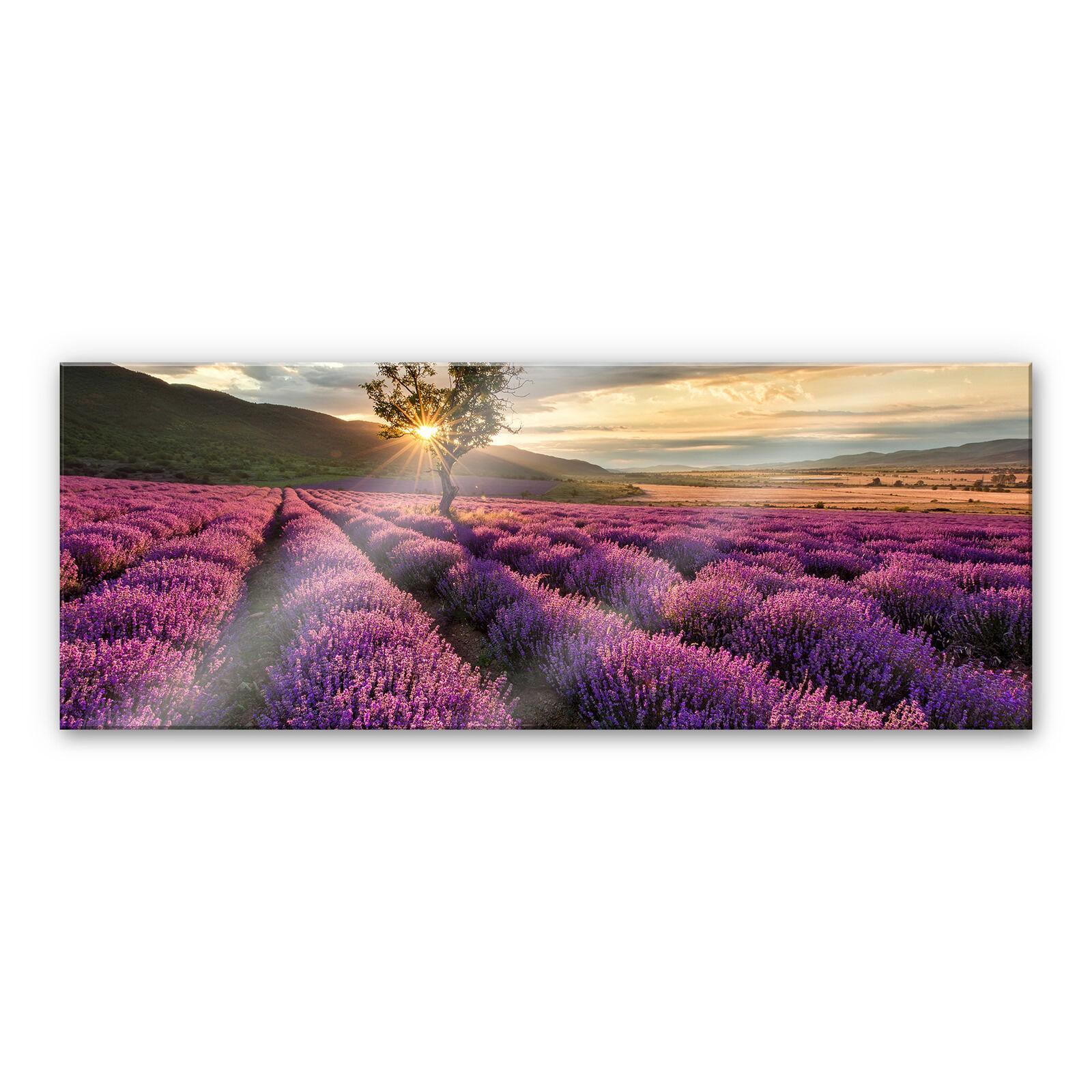 Acrylglasbild Lavendelblüte in der Provence - Panorama 01 lilat  WANDBILD 3D