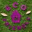 Hemway-Eco-Friendly-Glitter-Biodegradable-Cosmetic-Safe-amp-Craft-1-24-034-100g thumbnail 111