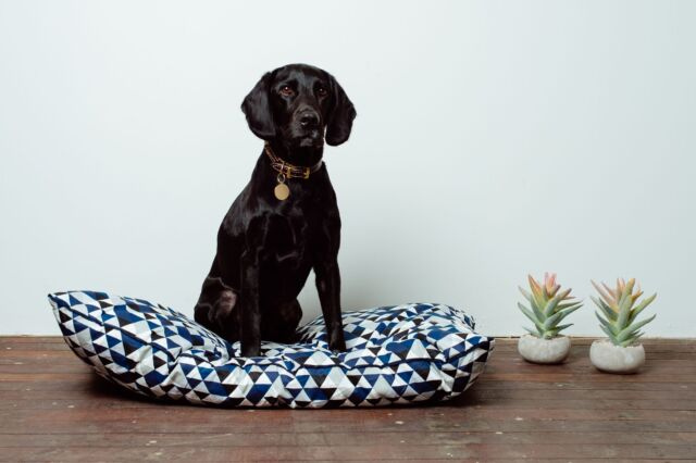 NEW STOCK MOG + BONE Futon Dog Bed Blue Diamond LAST ONES !!