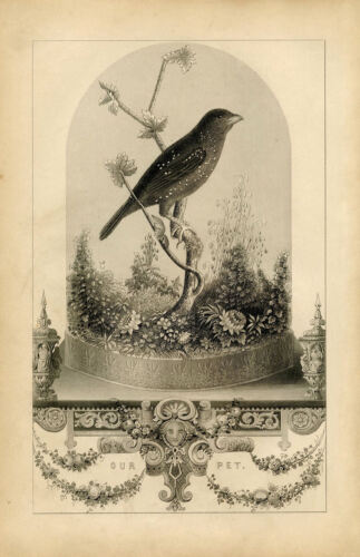 Framed Print Victorian Vintage Bird in a Cloche Jar Birdcage Picture Poster