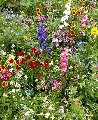 FLOWER MIX FULL SUN NATIVE AND NEW WORLD ANNUALS 100GM 80 SQ METERS
