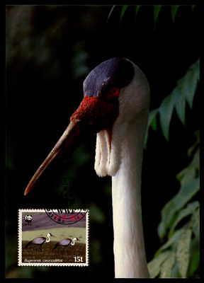 Sonnig Malawi Mk VÖgel Kranich Birds Crane Grue Maximumkarte Maximum Card Mc Cm M889 Maximumkarten Diverse Philatelie