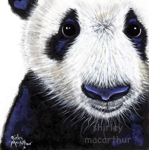 PANDA BEAR PRINTS of Original Watercolour Painting /'PANDA /' BY SHIRLEY MACARTHUR