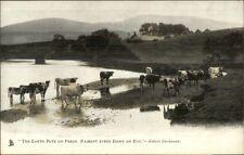 TUCK Animal Studies Cows Pasture Water c1910 Postcard
