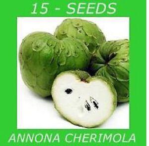 sium Sisarum h820 Skirret Seeds Samen Semillas Semi Official Website Rare 15 Graines De Chervis