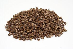 50-graines-Hawaiian-Baby-Woodrose-Argyreia-Nervosa