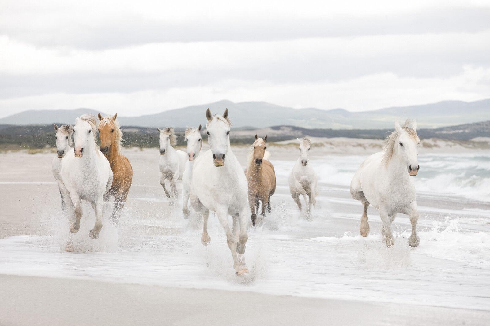 Weiß Horses - - - Fototapete 368 x 254cm - Wildpferde, Strand, Meer, Pferde - Komar c8a843