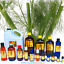 3ml-Essential-Oils-Many-Different-Oils-To-Choose-From-Buy-3-Get-1-Free thumbnail 38