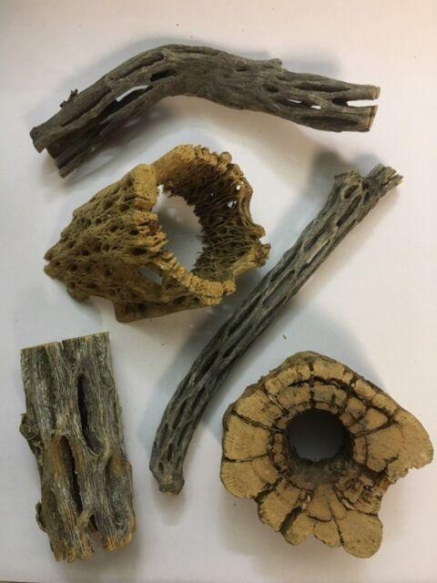 Natur Deko Set für Aquarien und Terrarien 5 Stücke Cholla Wood / Kaktus Holz