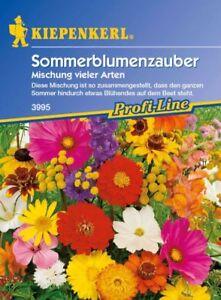 Kiepenkerl-Sonnenblumenzauber-3995-Florifere-Tournesols-Long-Apogee