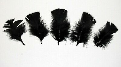 "30 Pcs BURNT COQUE FRINGE WINE 8-12/"" Tall Feathers Pad"