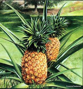 Yt 374 L Ananas De Tahiti PolynÉsie FranÇaise Fdc 1° Jour