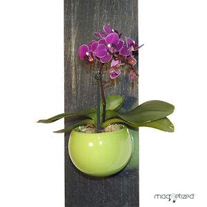 cache pot magn tique 8cm vert pomme cache pot magnets. Black Bedroom Furniture Sets. Home Design Ideas
