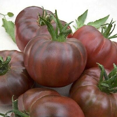 Seeds from Russia. Black Sea Giant Tomato
