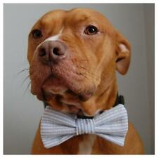 Blue Seersucker Bow Tie For Dogs - Free Shipping