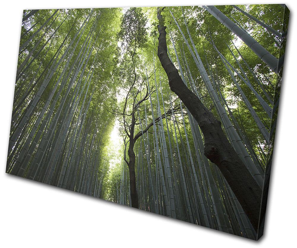 Forest Trees Nature Landscapes SINGLE Foto LONA pared arte Foto SINGLE impresion 7ea100