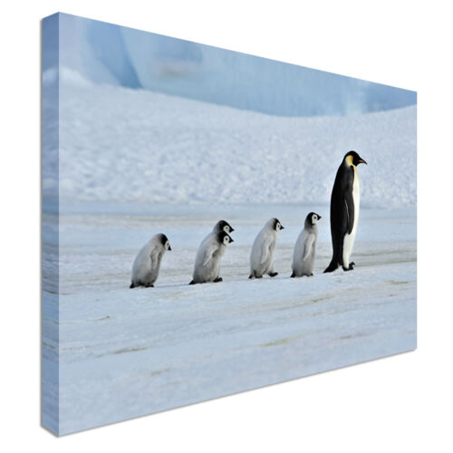 Penguin Family Babies Canvas wall Art prints high quality great value