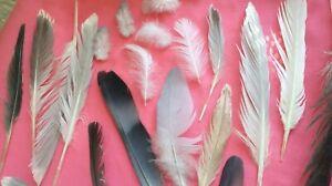Free-Fallen-veritable-plumes-X-23-Medium-Seagull-pigeon-Pie-UK-Gratuit-p-amp-p