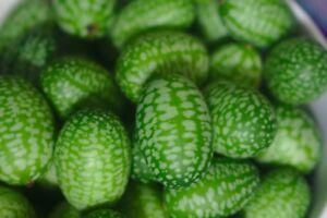 Mexikanische-Mini-Gurke-Melothria-scabra-Cucamelon-Mini-Wassermelone-Partysnack