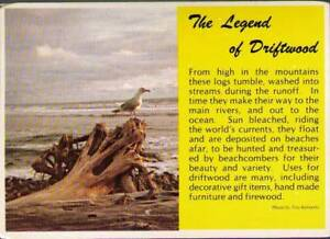 vz2-Postcard-The-Legend-of-Driftwood