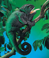 Chameleon Puppet 2215 18 Long Free Shipping/usa Folkmanis Puppets