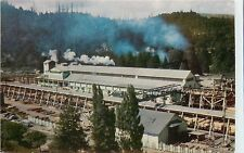 Vintage Postcard; Scotia CA Pacific Lumber Co. Saw Mill Humboldt County Unposted