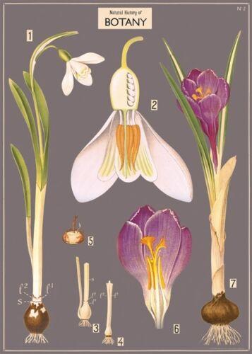 Botany - flowers Poster Cavallini & Co 20 x 28 Wrap