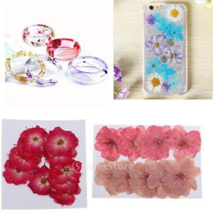 20pc-Mixed-Natural-Pressed-Dried-Flowers-Red-Rose-Sakura-for-DIY-Arts-Crafts