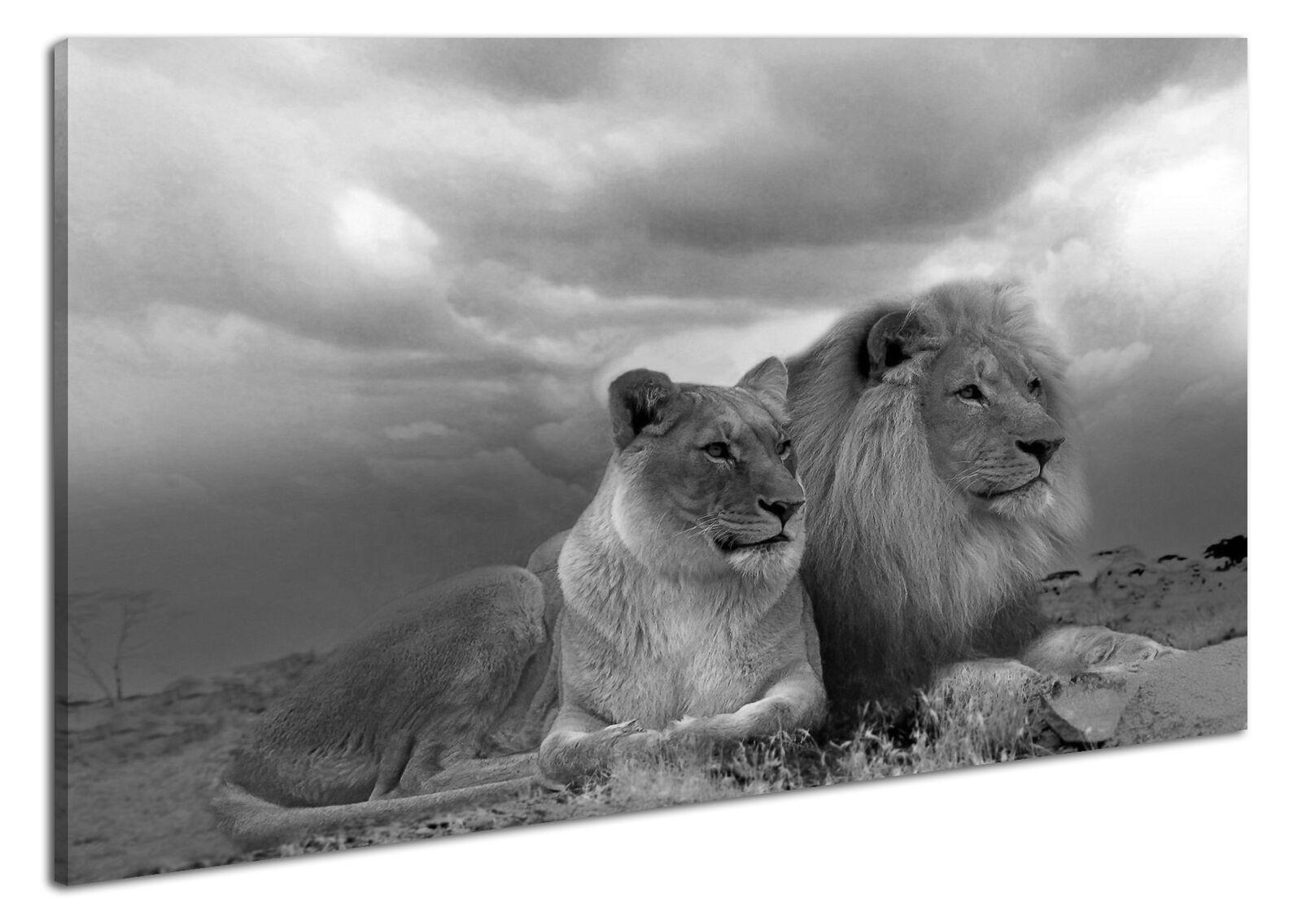 Leinwandbild Wandbild  Keilrahmen Löwen Afrika Safari Kunstdruck Landschaft