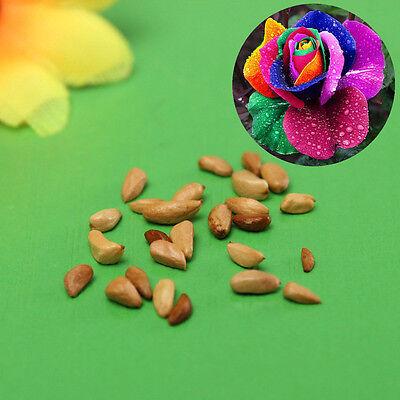 Lots Flower Fruit Plants Grass Seeds Bulbs Flower Seeds Pot Garden Home Decor
