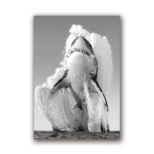 Great White Shark Poster Prints Black White Wall Art Painting Picture Home Decor